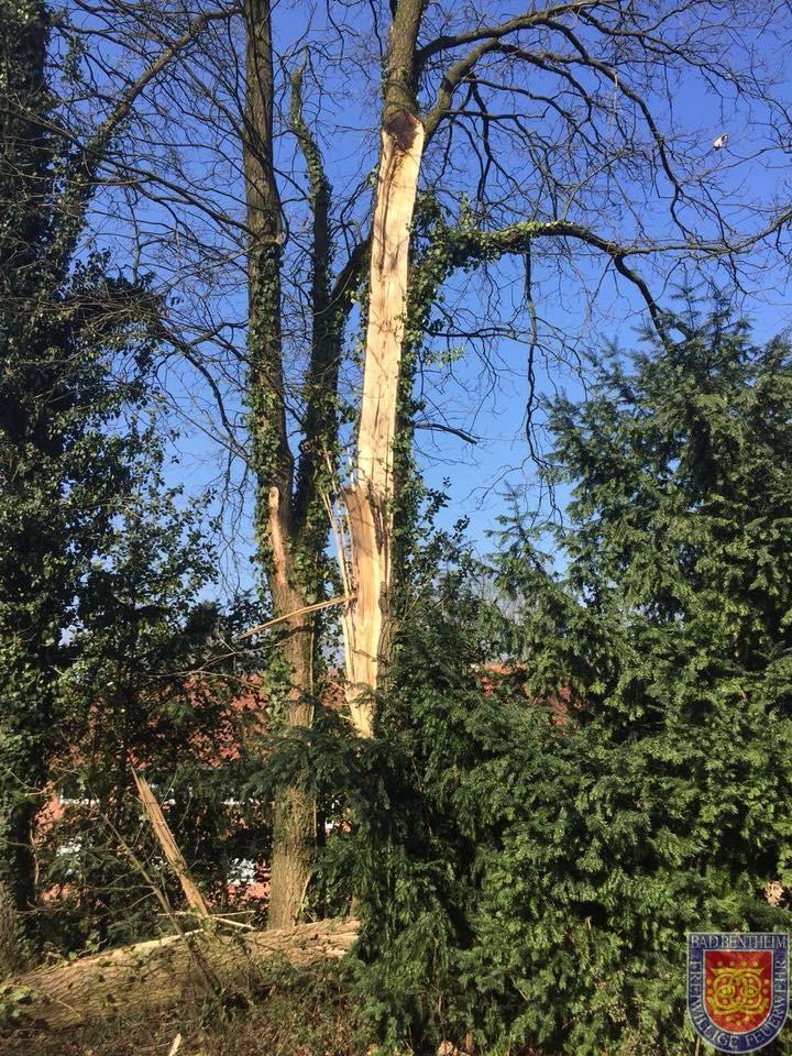 Baum fallen cool baum fallen with baum fallen free nchster vorheriger with baum fallen - Garten baum fallen ...